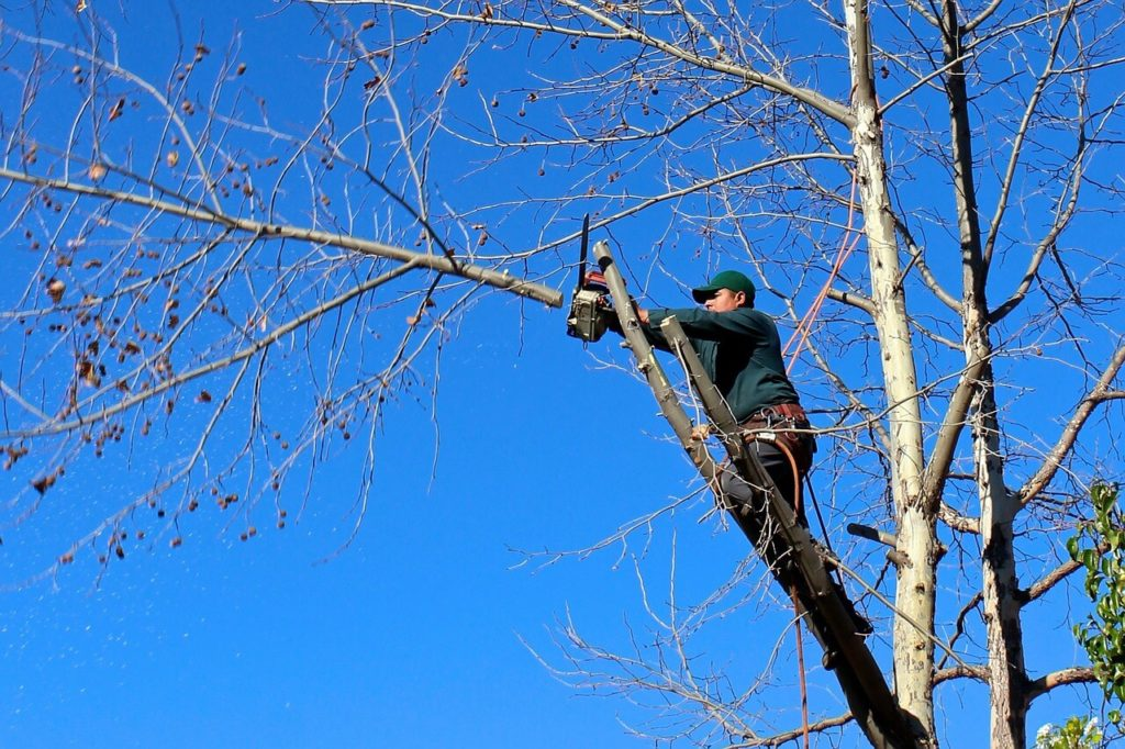 Contact Us-Frostproof FL Tree Trimming and Stump Grinding Services-We Offer Tree Trimming Services, Tree Removal, Tree Pruning, Tree Cutting, Residential and Commercial Tree Trimming Services, Storm Damage, Emergency Tree Removal, Land Clearing, Tree Companies, Tree Care Service, Stump Grinding, and we're the Best Tree Trimming Company Near You Guaranteed!