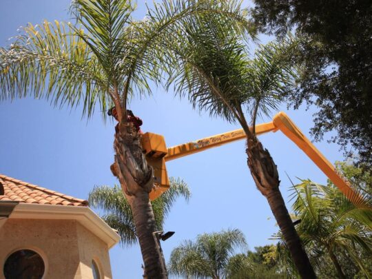 Palm Tree Trimming-Frostproof FL Tree Trimming and Stump Grinding Services-We Offer Tree Trimming Services, Tree Removal, Tree Pruning, Tree Cutting, Residential and Commercial Tree Trimming Services, Storm Damage, Emergency Tree Removal, Land Clearing, Tree Companies, Tree Care Service, Stump Grinding, and we're the Best Tree Trimming Company Near You Guaranteed!