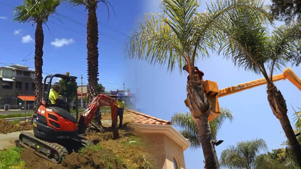 Palm tree trimming & palm tree removal-Frostproof FL Tree Trimming and Stump Grinding Services-We Offer Tree Trimming Services, Tree Removal, Tree Pruning, Tree Cutting, Residential and Commercial Tree Trimming Services, Storm Damage, Emergency Tree Removal, Land Clearing, Tree Companies, Tree Care Service, Stump Grinding, and we're the Best Tree Trimming Company Near You Guaranteed!