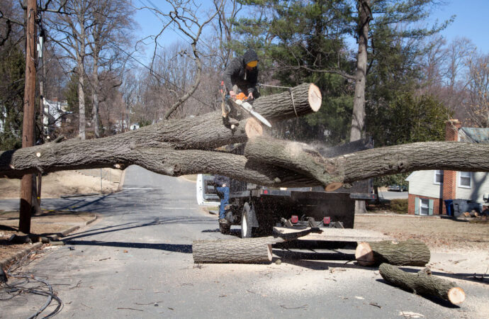 Residential Tree Services-Frostproof FL Tree Trimming and Stump Grinding Services-We Offer Tree Trimming Services, Tree Removal, Tree Pruning, Tree Cutting, Residential and Commercial Tree Trimming Services, Storm Damage, Emergency Tree Removal, Land Clearing, Tree Companies, Tree Care Service, Stump Grinding, and we're the Best Tree Trimming Company Near You Guaranteed!