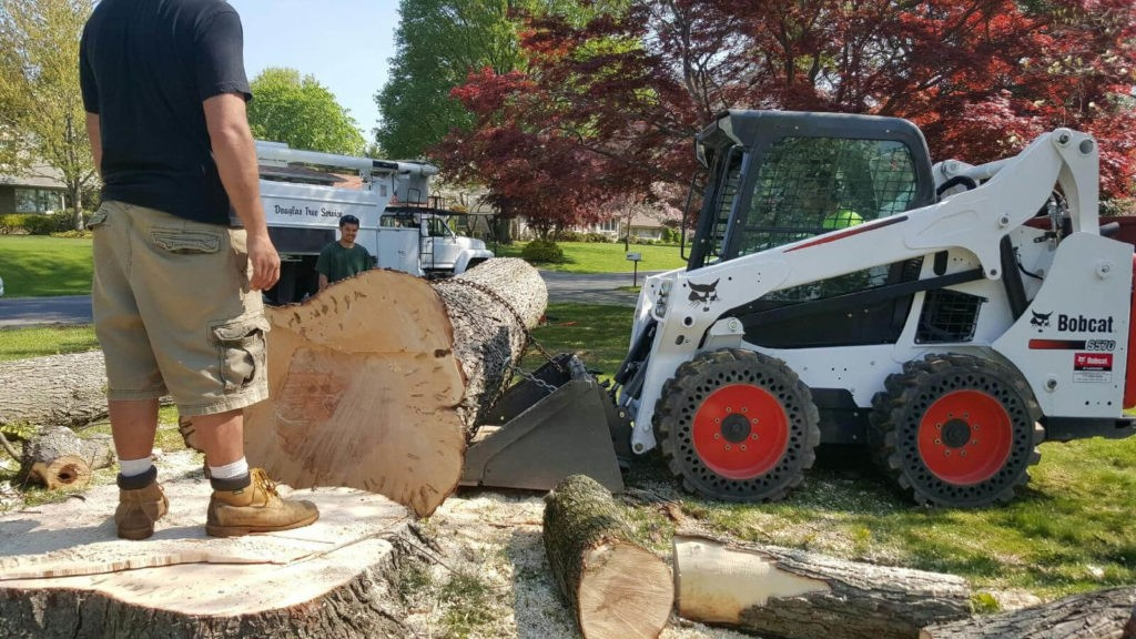 Services-Frostproof FL Tree Trimming and Stump Grinding Services-We Offer Tree Trimming Services, Tree Removal, Tree Pruning, Tree Cutting, Residential and Commercial Tree Trimming Services, Storm Damage, Emergency Tree Removal, Land Clearing, Tree Companies, Tree Care Service, Stump Grinding, and we're the Best Tree Trimming Company Near You Guaranteed!