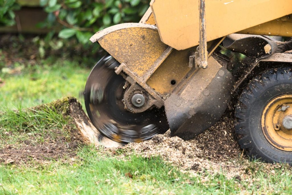 Stump Grinding-Frostproof FL Tree Trimming and Stump Grinding Services-We Offer Tree Trimming Services, Tree Removal, Tree Pruning, Tree Cutting, Residential and Commercial Tree Trimming Services, Storm Damage, Emergency Tree Removal, Land Clearing, Tree Companies, Tree Care Service, Stump Grinding, and we're the Best Tree Trimming Company Near You Guaranteed!