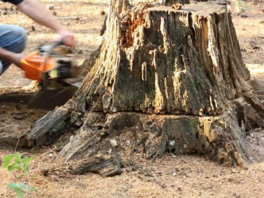 Stump Removal-Frostproof FL Tree Trimming and Stump Grinding Services-We Offer Tree Trimming Services, Tree Removal, Tree Pruning, Tree Cutting, Residential and Commercial Tree Trimming Services, Storm Damage, Emergency Tree Removal, Land Clearing, Tree Companies, Tree Care Service, Stump Grinding, and we're the Best Tree Trimming Company Near You Guaranteed!
