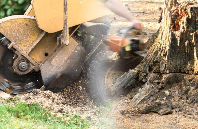 Stump grinding & removal-Frostproof FL Tree Trimming and Stump Grinding Services-We Offer Tree Trimming Services, Tree Removal, Tree Pruning, Tree Cutting, Residential and Commercial Tree Trimming Services, Storm Damage, Emergency Tree Removal, Land Clearing, Tree Companies, Tree Care Service, Stump Grinding, and we're the Best Tree Trimming Company Near You Guaranteed!