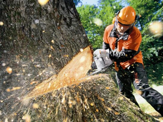 Tree Cutting-Frostproof FL Tree Trimming and Stump Grinding Services-We Offer Tree Trimming Services, Tree Removal, Tree Pruning, Tree Cutting, Residential and Commercial Tree Trimming Services, Storm Damage, Emergency Tree Removal, Land Clearing, Tree Companies, Tree Care Service, Stump Grinding, and we're the Best Tree Trimming Company Near You Guaranteed!