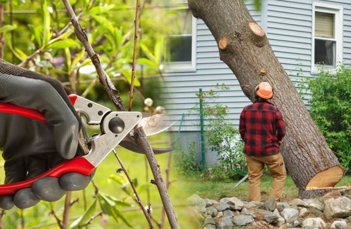 Tree pruning & tree removal-Frostproof FL Tree Trimming and Stump Grinding Services-We Offer Tree Trimming Services, Tree Removal, Tree Pruning, Tree Cutting, Residential and Commercial Tree Trimming Services, Storm Damage, Emergency Tree Removal, Land Clearing, Tree Companies, Tree Care Service, Stump Grinding, and we're the Best Tree Trimming Company Near You Guaranteed!